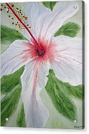 White Hibiscus Flower Acrylic Print