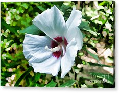White Hibiscus From Missouri Botanical Gardens Acrylic Print by Luther   Fine Art