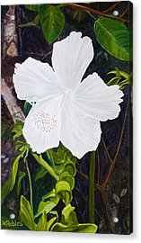 White Hibiscus Acrylic Print by Mike Robles