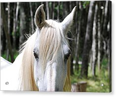 Acrylic Print featuring the photograph White Horse Close Up by Jocelyn Friis