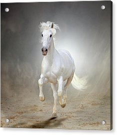 White Horse Galloping Acrylic Print by Christiana Stawski