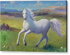 White Horse Acrylic Print by Gwen Carroll