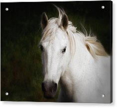 Acrylic Print featuring the photograph White Horse Of The Carmargue by Gigi Ebert