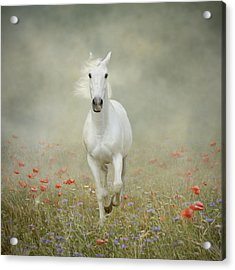 White Horse Running Through Poppies Acrylic Print by Christiana Stawski