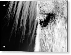 White Horse  Acrylic Print by Tommytechno Sweden