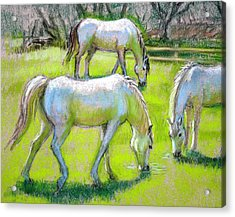 Acrylic Print featuring the painting White Horses Grazing by Sue Halstenberg
