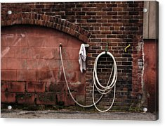White Hose Acrylic Print by Tom Singleton