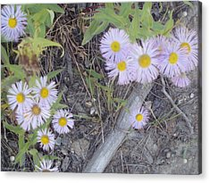 Acrylic Print featuring the photograph White In The Wild by Fortunate Findings Shirley Dickerson