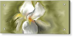 White Iris Acrylic Print by Jessica Wright