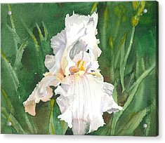 White Iris Acrylic Print by Spencer Meagher