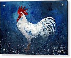 White Leghorn Acrylic Print