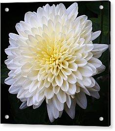 White Lighting Acrylic Print by Bruce Bley