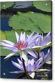 Acrylic Print featuring the photograph White Lilies by Chrisann Ellis