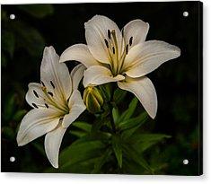 White Lilies Acrylic Print by Davorin Mance
