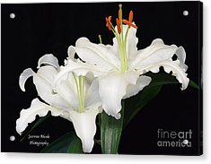 Acrylic Print featuring the photograph White  Lilies by Jeannie Rhode