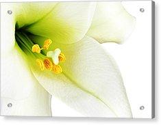 White Lilly Macro Acrylic Print