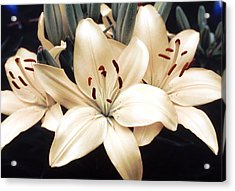 White Lily Beauty Acrylic Print