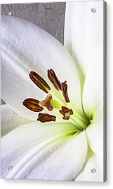 White Lily Close Up Acrylic Print