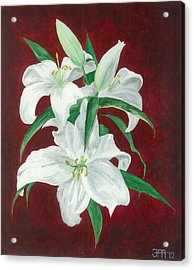 White Lily Dark Red Background  Acrylic Print by Jekaterina Mudivarthi