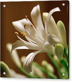 White Lily Acrylic Print by Joseph Skompski