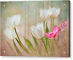 White Lily Show Acrylic Print