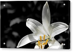 White Lily With Yellow Stamens Against Dark Background Acrylic Print