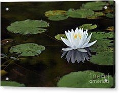 Acrylic Print featuring the photograph White Lotus Lily Flower And Lily Pad by Glenn Gordon