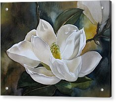 White Magnolia Acrylic Print by Alfred Ng