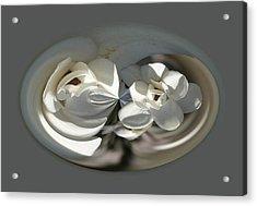 White Magnolia Series 511 Acrylic Print