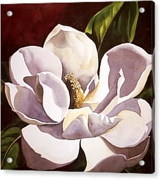 White Magnolia With Red Acrylic Print