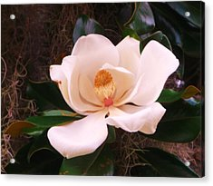 Acrylic Print featuring the photograph White Magnolia by Yolanda Rodriguez