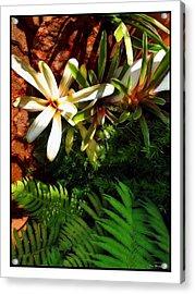 White Maui Flowers Acrylic Print by Joan  Minchak