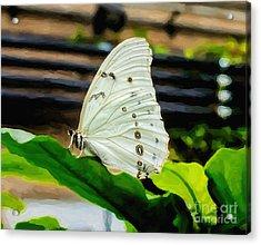 White Morpho Acrylic Print by Jon Burch Photography