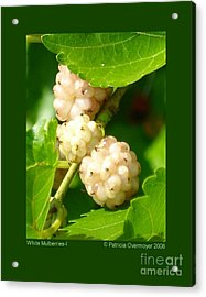 White Mulberries-i Acrylic Print
