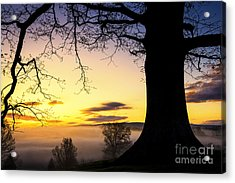 White Oak At Sunrise Acrylic Print by Thomas R Fletcher