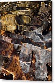 White Oak Acrylic Print by Fred  Sheridan