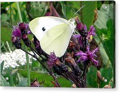 White On Purple On Green Acrylic Print by Robert Lance