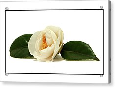 Acrylic Print featuring the photograph White On White by Ron Roberts