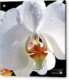 Acrylic Print featuring the photograph White Orchid by Elvira Ladocki