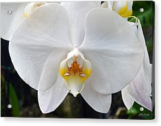 Acrylic Print featuring the photograph White Orchid by Aloha Art