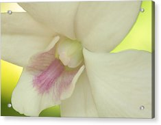 White Orchid Acrylic Print by Greg Allore