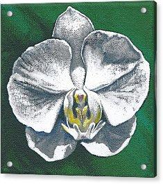 White Orchid I Acrylic Print
