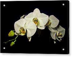 White Orchid II Acrylic Print