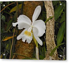 White Orchid Acrylic Print