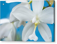 White Orchid Acrylic Print by Leigh Anne Meeks