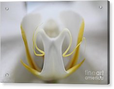 White Orchid Macro Acrylic Print