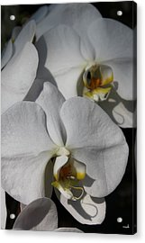 White Orchid Acrylic Print by Mark Steven Burhart