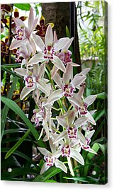 White Orchids 1 Acrylic Print by Timothy Blair