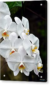Acrylic Print featuring the photograph White Orchids After The Rain by Aloha Art