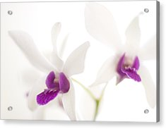 Acrylic Print featuring the photograph White Orchids by Bradley R Youngberg